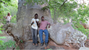 Adnomore Chirindira (right), Godi Chinguo (center) and volunteer Robby Zeinstra (background) beneath a Baobab (Adansonia digitata) in which they have just located and recovered an unusual orchid